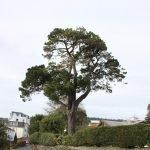 Full Tree List